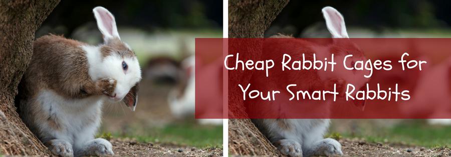 cheap rabbit
