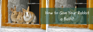 how to give your rabbit a bath