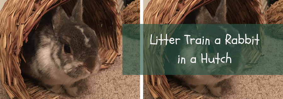 how to litter train a rabbit in a hutch