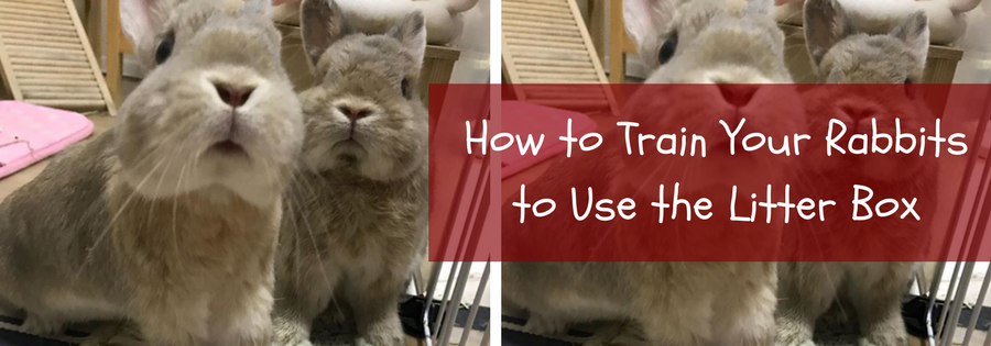 how to potty train a rabbit fast