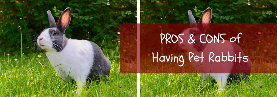 rabbits as pets pros and cons