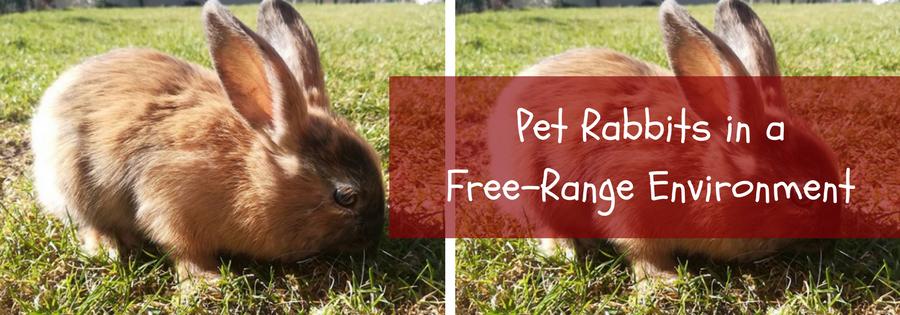 raising cage free rabbits