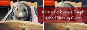 where do rabbits sleep
