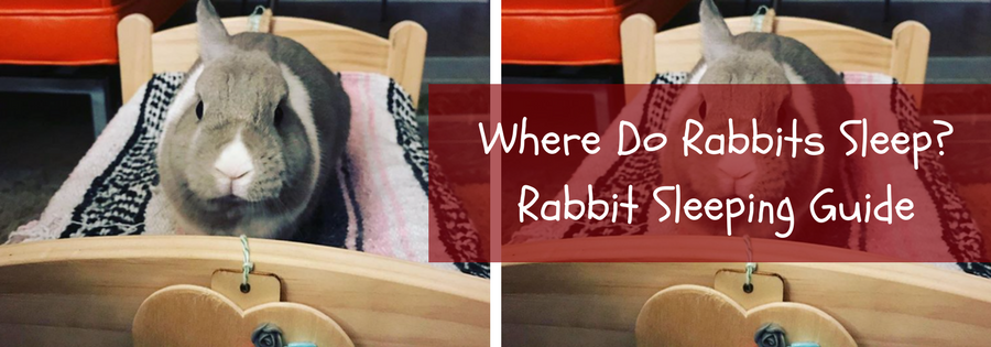 where do rabbits sleep
