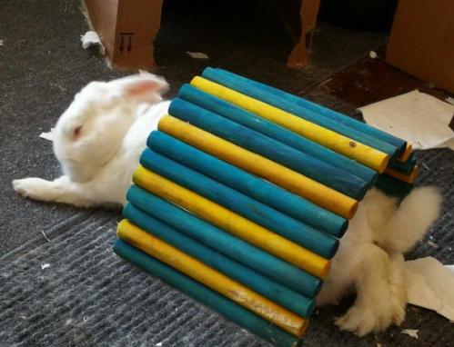 rabbit chew toys