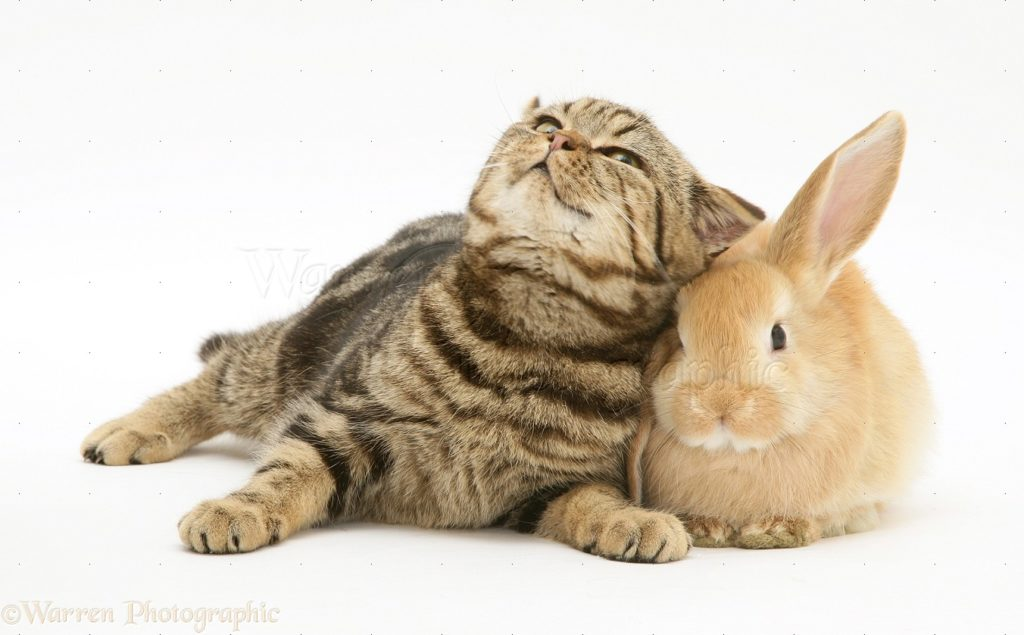 Rabbits and cats as pets