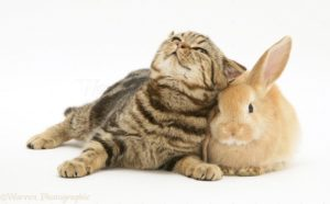 cats and rabbits