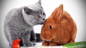 Cats and rabbits as pets
