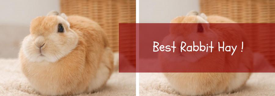 best bunny hay