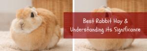 best rabbit hay