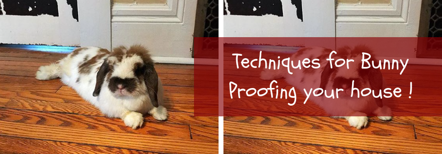 how to bunny proof your house