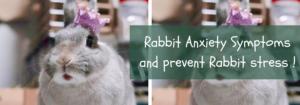 rabbit signs of stress