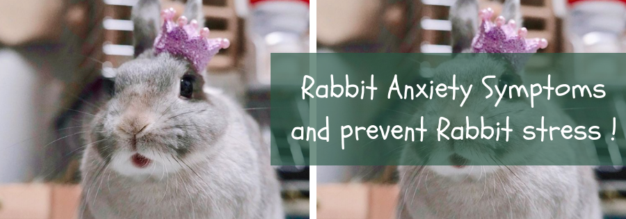 rabbit signs of stress