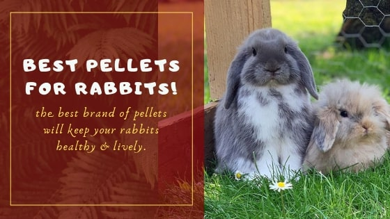 Best pellets for rabbits