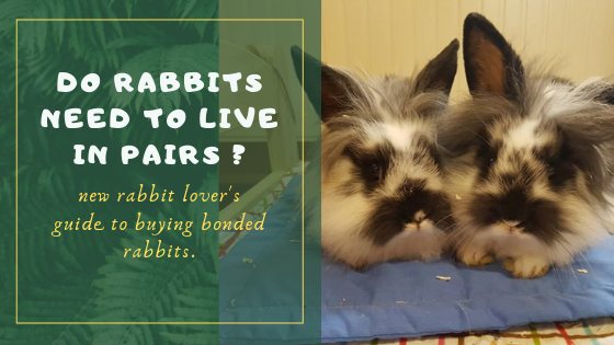 do rabbits need to live in pairs
