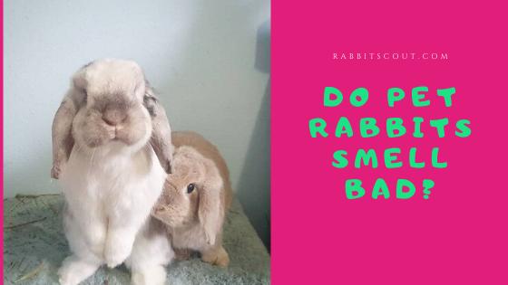 do rabbits smell