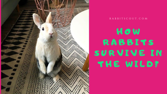 how do rabbits protect themselves from predators
