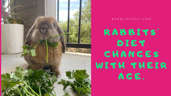 how to tell how old a rabbit is?