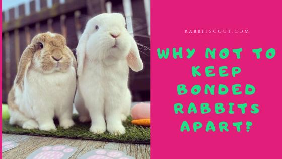 separating bonded rabbits