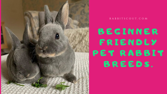 best breed of rabbit for first time owners