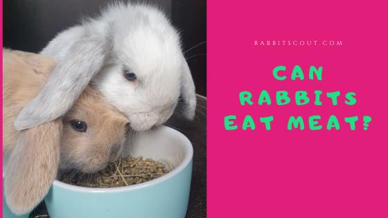 are rabbits herbivores
