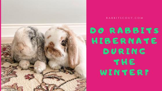do rabbits hibernate