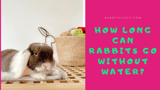 how long can rabbits go without water