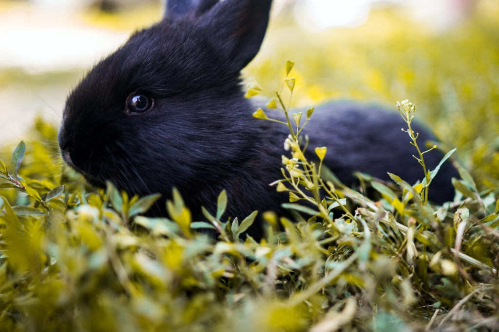 How to Teach a Rabbit Her Name
