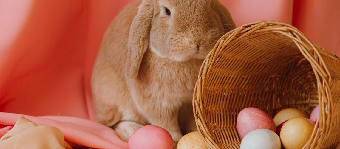 Girl rabbit names