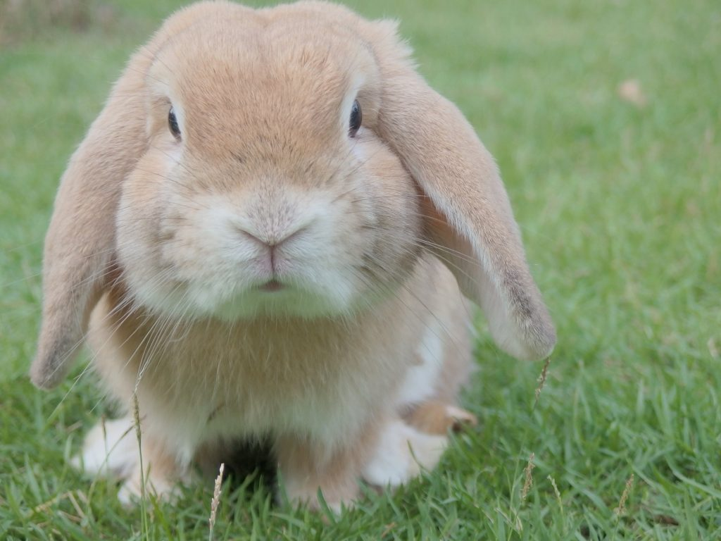 Will My Rabbit Respond To His Name?