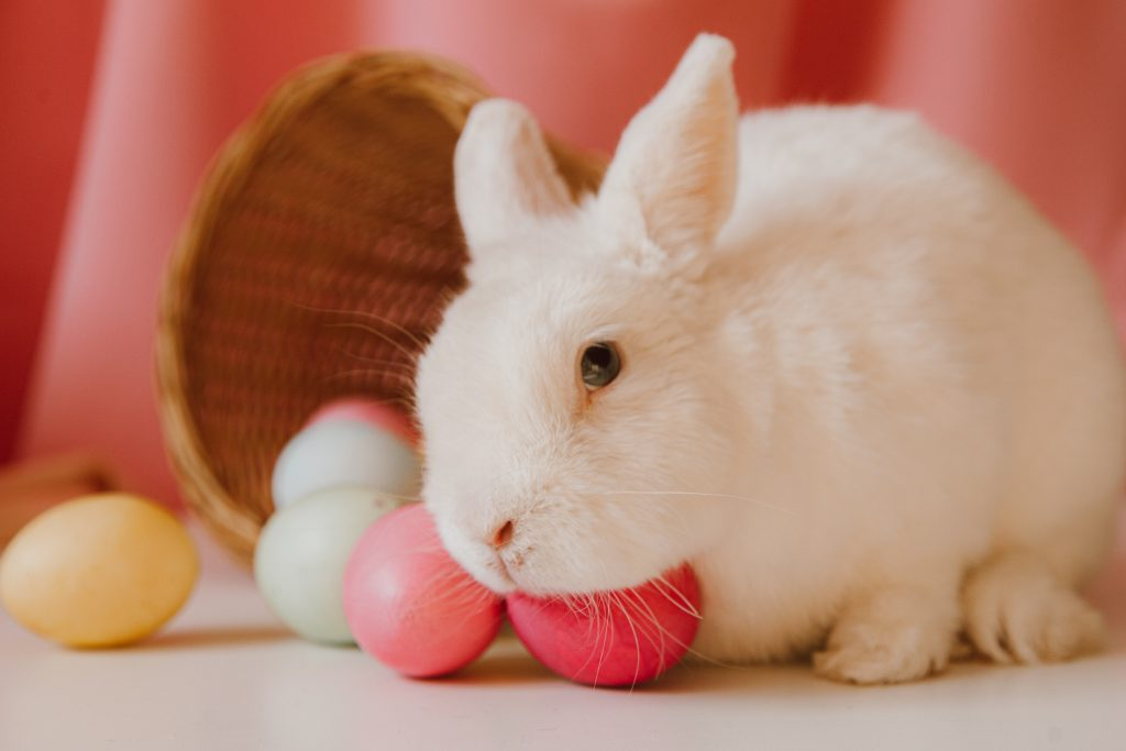 Fun Facts About Female Rabbits