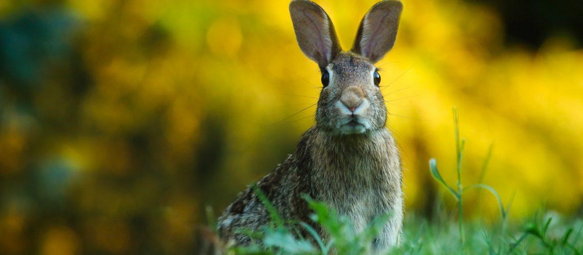 Boys rabbit names