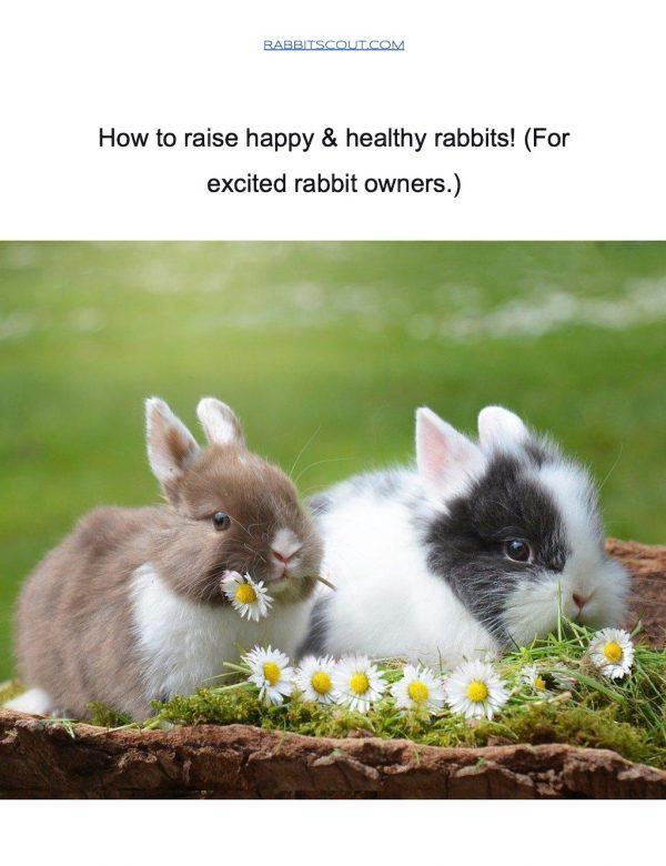 How to raise happy & healthy rabbits!