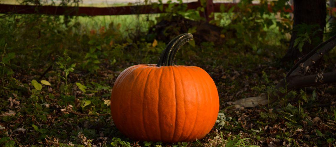 Pumpkins for rabbits